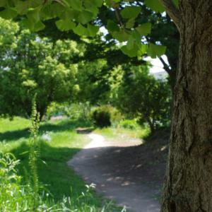 緑の小径を歩く