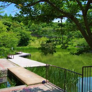 目に染み入る緑の森@奥須磨公園
