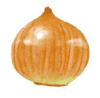 玉ねぎの皮に多く含まれる奇跡のケルセチン