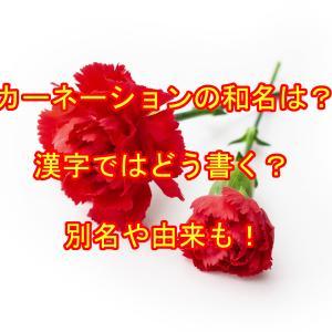 カーネーションの和名・漢字は?別名や由来についても詳しく!