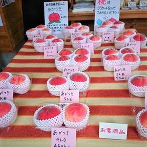 ♡夢の実ファームみよし♡で美味しい桃を直売しています~♪