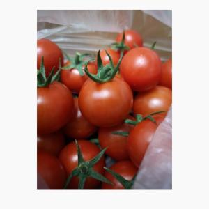 トマト農家に会ってきました 【雑記】