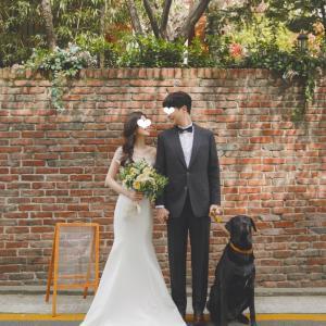 今月の韓国結婚式の実況