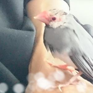 文鳥とお風呂