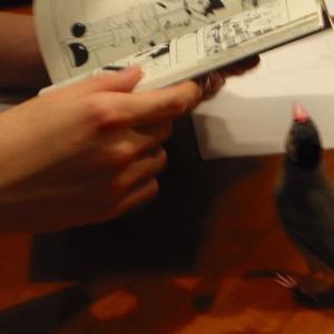 昔の写真・息子と遊ぶ文鳥