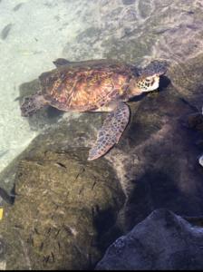 ハワイで妊娠生活2