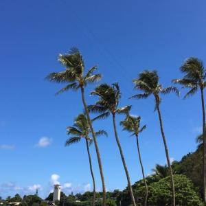 ハワイと日本の行き来は、日本政府の回答待ち