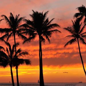 ハワイ 失業から雇用主の健康保険適用打ち切りが増加に