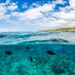 ハワイ ラナイ島で感染者が急増しています