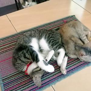 「狭いでしょ」と思わず猫にツッコんでしまいました