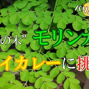 """超絶健康! モリンガ料理 Part3 """"究極のドライカレー"""""""