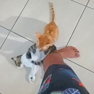 邪魔しぃ猫