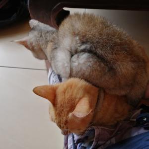 雨季丸出しで猫も寒がってますニャ