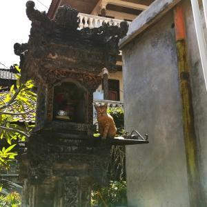 バリのネコ神様
