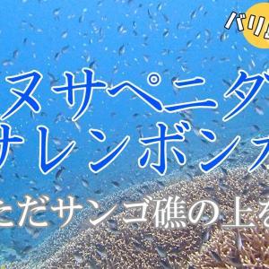 バリ島ダイブポイント「ヌサペニダ・ヌサレンボンガン(中~上級者向け)」サンゴ礁の上を飛び続ける!