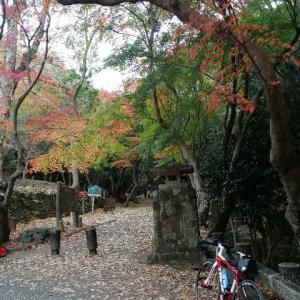 赤とんぼサイクリング 〜たつの市を一望の絶景と城下町の紅葉〜
