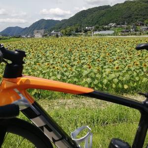 ひまわりライド 〜兵庫県佐用町の向日葵を見に行く〜