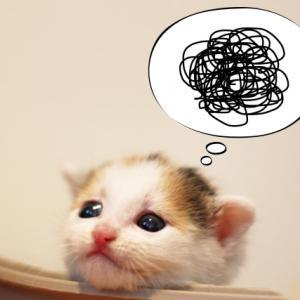 プチ☆バランス思考実践(〃▽〃)「あ~~よかった♡」でおしまいにできました(*´▽`*)