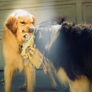 バリ島で犬に襲われた話とその対処法【狂犬病の可能性も】