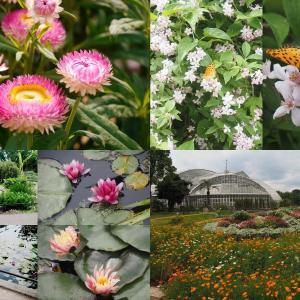京都植物園 再開 カメラチェック花巡り