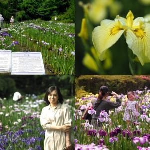 京都植物園 はなしょうぶ園 撮頃カメラチェック