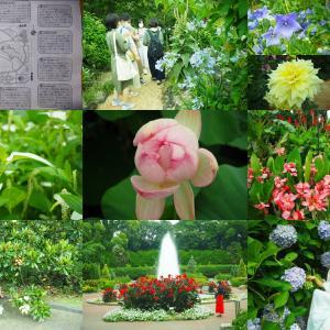 京都植物園 花を探して!見頃全12花撮巡り