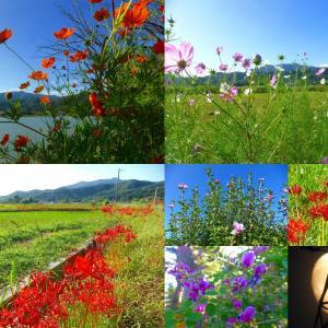 嵯峨野 広沢の池 天高く秋の花 撮り巡り