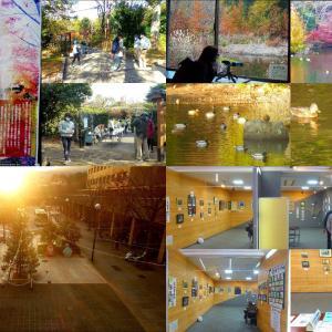 桂坂古墳の森、野鳥遊園、ラクセーヌ年金組合作品展