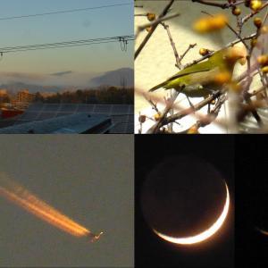 雲海、メジロ、夕焼け飛行機雲、三日月撮影会