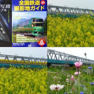 桂川 ドクターイエロー下り撮り処 菜の花コラボ