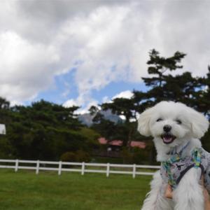 大草原の小さなお犬
