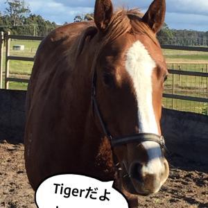タイガーだぞ!
