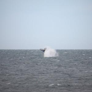 クジラ発見!
