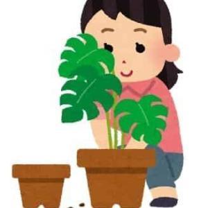 【とある魔術の禁書目録】暮亞=サンジェルマン説!!植物と炭素とエレメント・・・?【考察】