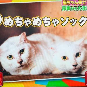 【TV】坂上どうぶつ王国に大網さんから協力依頼🐈多動飼育崩壊現場に海人くんも出動‼️猫を初めて飼う人は正しい知識を✨