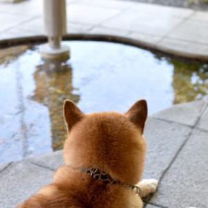 FX入門〜初心者おすすめコラム 犬とその影 欲張ってはいけない!