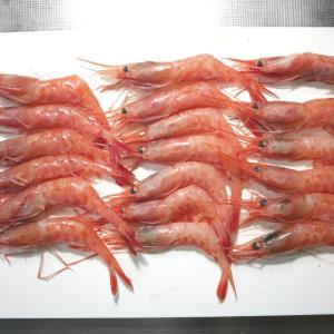 海老好き垂涎の甘海老丼✨