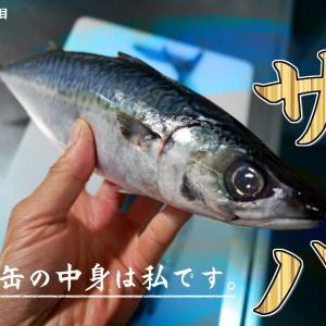 72匹目 庶民の味方サバ!鯖缶ブームに反して鮮魚を捌く!