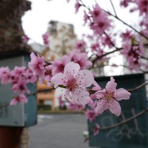 連勤明けのちょい散歩で春を感じる