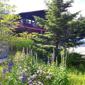 八ヶ岳自然ふれあいセンターから清泉寮周辺の自然歩道散歩
