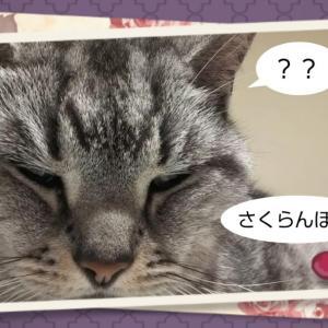 「田島 嫌い」の謎