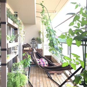 マンションでの「緑のある暮らし」バルコニーガーデニングは限られたスペースを有効に、立体的に使って緑豊かに魅せると効果的!