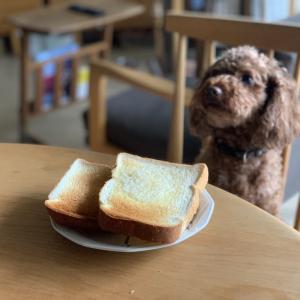 美味しいトーストが食べたい!!いつかは「バルミューダ」が絶対に欲しい!と思ってますが、「トーストスチーマー」が思いの他高性能すぎて満足しちゃってます