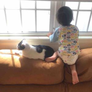 のすけ1歳9ヶ月