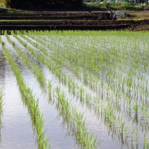 反?町?農業で使われる面積をわかりやすく解説!