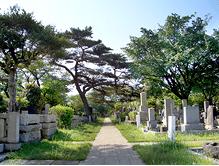 「都立霊園(多磨霊園)の墓じまいと納骨」を検討している方へ