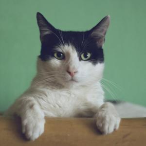【猫の脱走防止大作戦!】愛猫を脱走など危険から守ろう