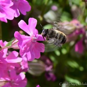 月曜日はミツバチⅡ