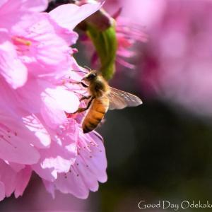 水曜日も開き直ってミツバチ(≧◇≦)