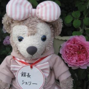 今日咲いた薔薇 プリンセスアレキサンドラオブケント 他 館長シェリー より❣